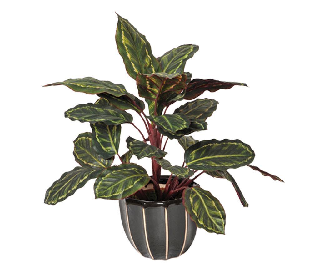 Planta artificiala in ghiveci Galatea Cebra imagine