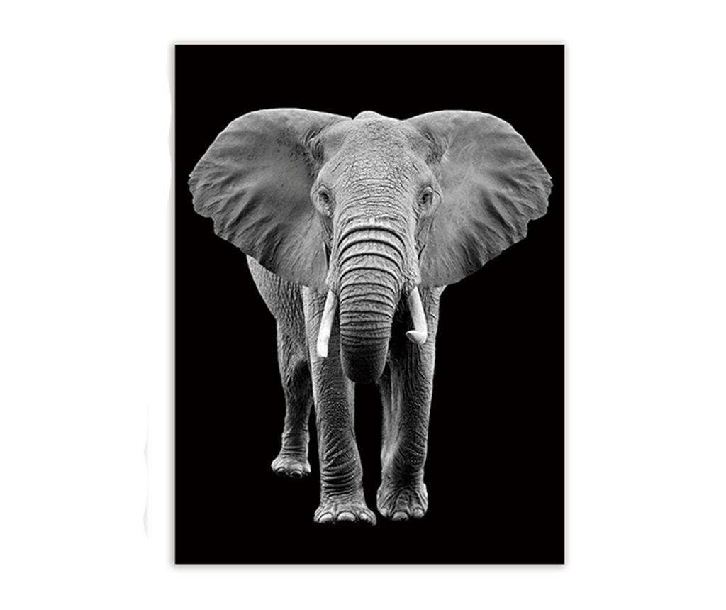 Tablou Elephant Portrait 60x80 cm