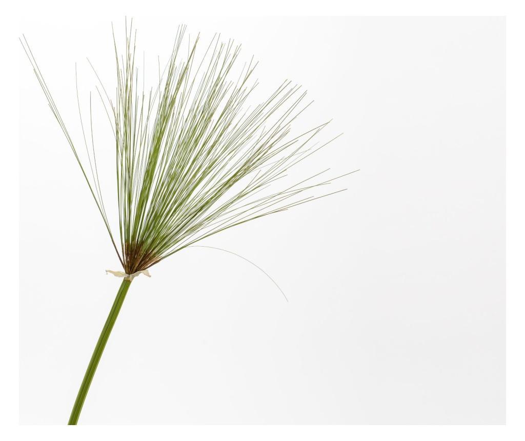 Floare artificiala Feuillage imagine