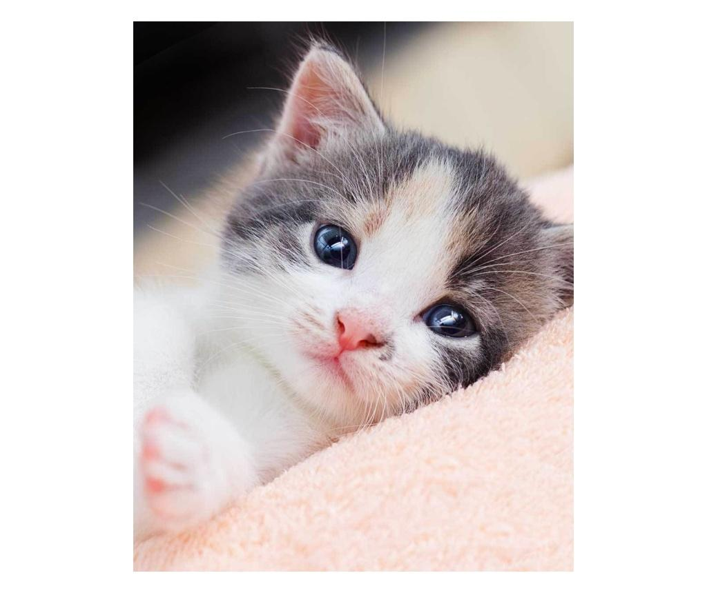Patura Kitten 120x150 cm Sweet home, poliester, multicolor - Sweet home, Multicolor imagine