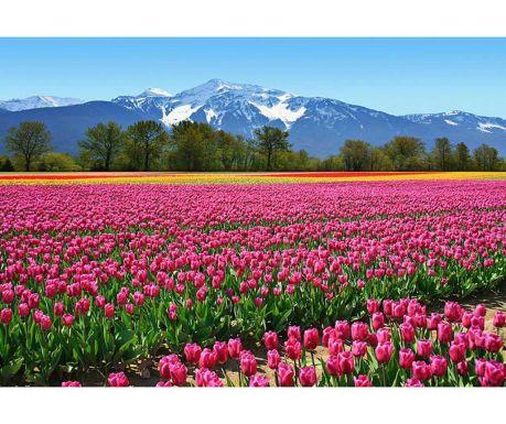 Тапет Tulips 254x366 см