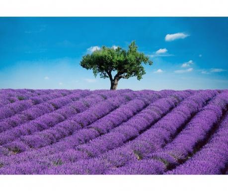Provence Tapéta 254x366 cm