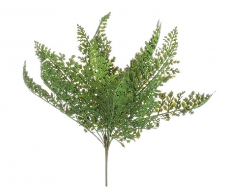 Felce Green Műnövény