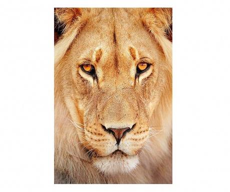 Lion Kép 80x120 cm