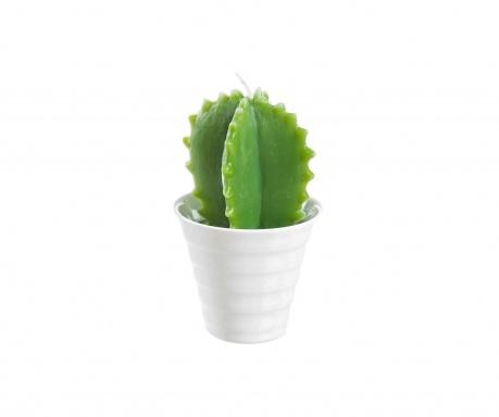 Świeczka Mexico Cactus