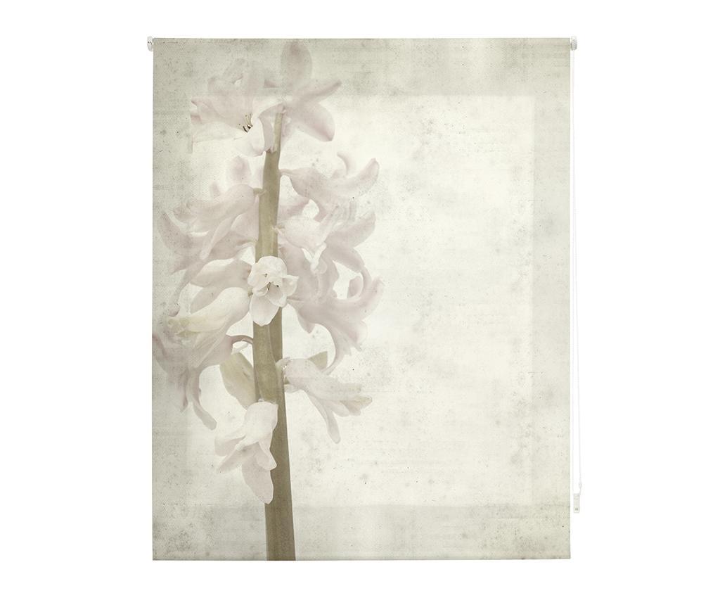 Jaluzea Tip Rulou Hyacinth