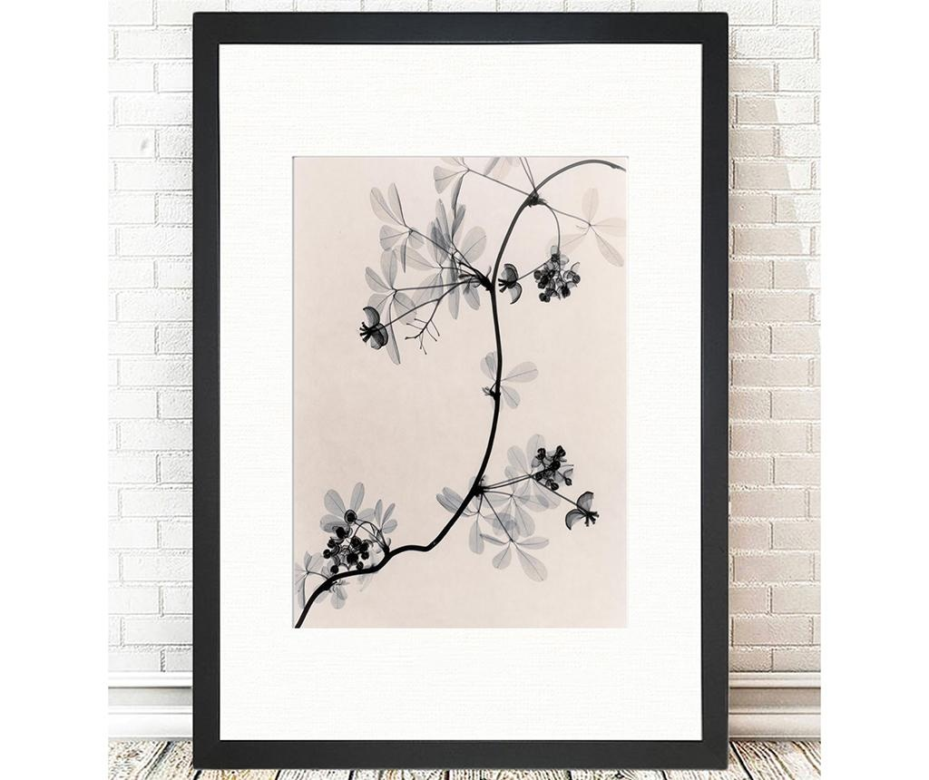 Cressida Branch Kép 24x29 cm