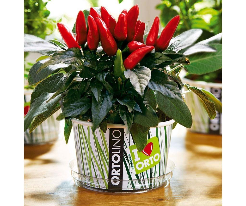 Ortolino Red Chilli Vetőmag-ültető kit