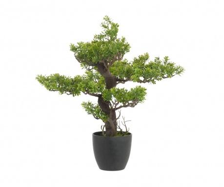 Bonsai Tree Műnövény cserépben