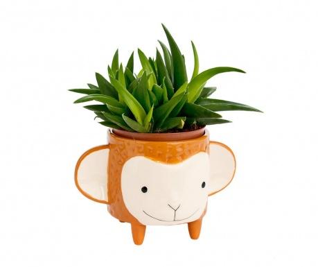 Cvetlični lonec Monkey