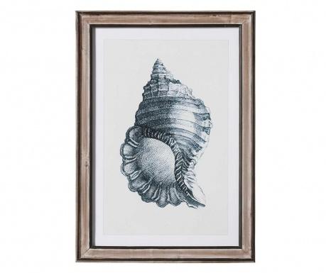 Shell Round Kép 50x70 cm