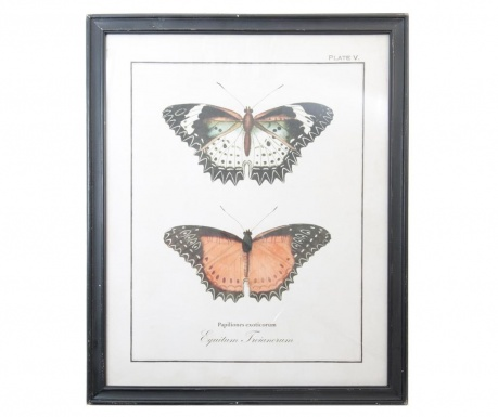 Butterfly Kép 65x80 cm