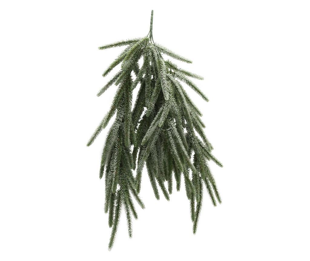 Ramura decorativa Kiefer - Boltze, Verde